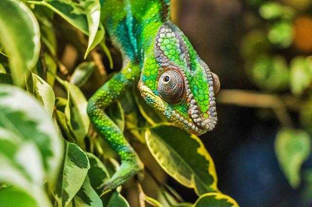 Noisybe natura - Nosy Be, la perla del Madagascar