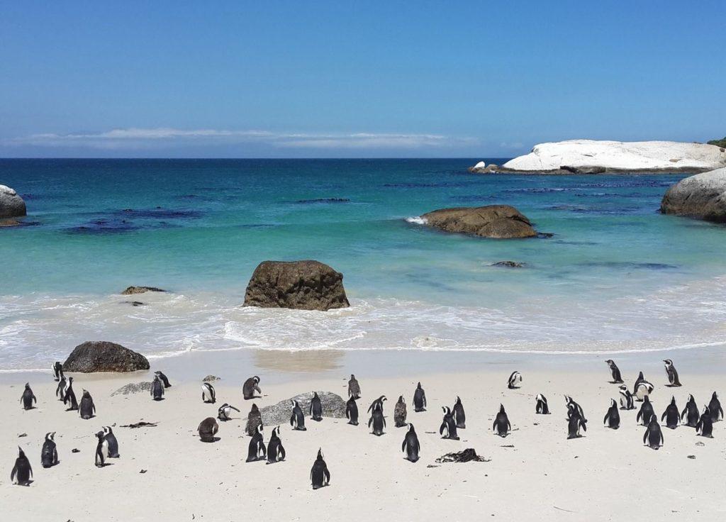 penguins8572061920111111 e1561556417591 1024x736 - Viaggio di nozze in Sudafrica