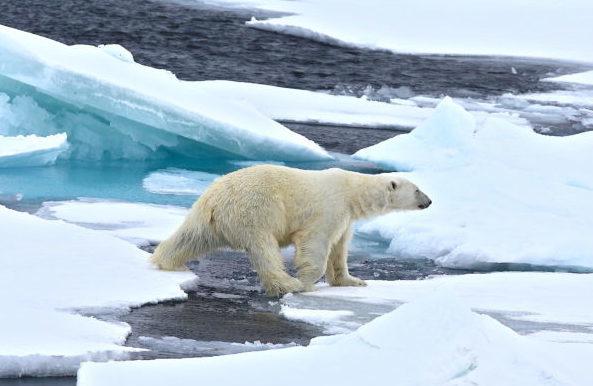 Viaggio-di-Nozze-insolito-Svalbard