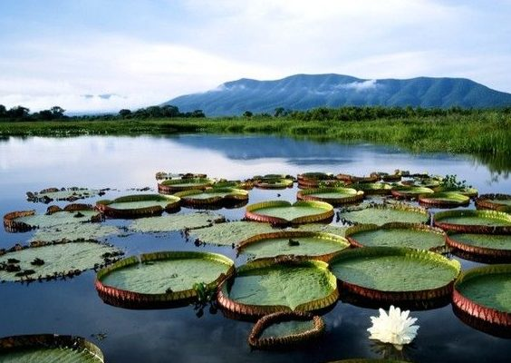 orchidee allalba nel pantanal brasile cnat photosg 258 1 e1568038576445 - Luna di miele tra le bellezze del Brasile