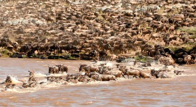 kenya grande migazione